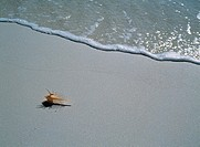 Shell & beach (thumbnail)