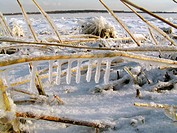 Icicles on reed. Straw in the sea-shore after storm. Puhtu peninsula. Virtsu, Matsalu National Park. Estonia