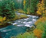 McKenzie River, Willamette National Forest. Oregon, USA