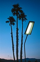 Palm trees and street lamp at dusk. Califronia desert. USA