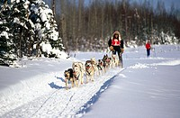 Sled dog racing. Alaska, USA