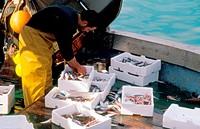 fish industry, italy, lazio, anzio