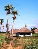 Rural scene. Pinar del Río province. Cuba.