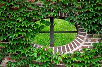 Oval window surrounded by green plants