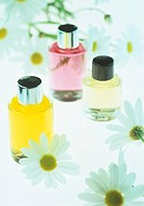 Aromatherapy oils and daisies (family Asteraceae).