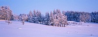 Winter in the Livradois-Forez region. France.