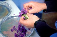 italy, piemonte, borgo san dalmazzo, agrimontana, violet manufacturing