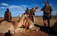 africa, kenya, laikipia plateau, arabian camel