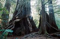 Redwood National Park. California, USA