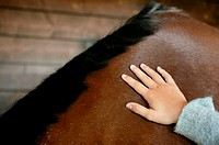 Person stroking a bay horse