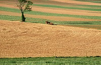 Farmland fields and tree