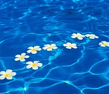 Flowers on water