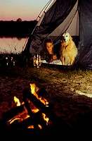 Boy camping in a tent with his dog