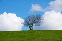 Grassy hillside with white clouds and solitary tree