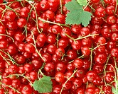 Redcurrants (filling the picture)