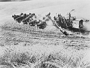 Combine harvester pulled by 26 mules. These huge individually built combine harvesters or 'headers' were used on the great wheat belts of California a...