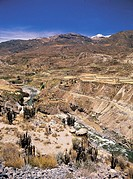Colca Canyon, Peru, with a river running through ancient agricultural terraces still used today.