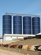 cattle feed storage bins, Iowa