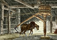 Horse gin. Historical artwork of a horse at work in a coal mine. The horse is attached to a gin, a winding mechanism used to pull buckets of coal to t...