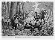 Kangaroo hunting. Engraving from 'Le Tour du Monde'