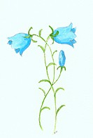 A watercolor painting of blue flowers