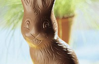 Easter bunny, chocolate