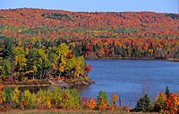 USA, Moosehead Lake, Greenville, Maine, Indian Summer