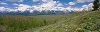 Aspen (Populus tremuloides) grove and Teton mountain range from Shadow Mountain, Grand Teton National Park. Teton County, Wyoming, USA