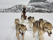 Woman on a dog sled