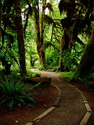 Path through Hoh rainforest, Olympic Peninsula, Washington, USA