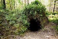 Brown Bear (Ursus arctos) burrow. Finland