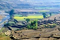 Terraced fields, Kathmandu Valley. Nepal