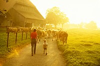 10150833, farmer, peasant, farmers, agriculture, mood, farm, back light, child, cows, animals, beasts,