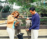 Couple feeding donkeys in petting zoo