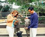 Couple feeding donkeys in petting zoo
