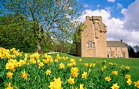 Crathes Castle and daffodils. Aberdeenshire, Scotland, UK
