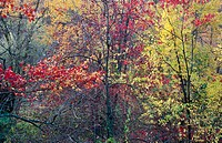 Trees and foilage in autumn colors