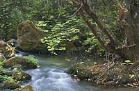 Majaceite river, Sierra de Grazalema Natural Park. Cádiz province, Andalusia, Spain