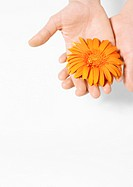 Hand holding flower head