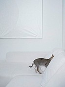 Grey cat hiding in a white sofa