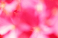 Flower,Abstract,Full-Frame,Full-Frame-Four-Colour,Nature-Only,Out-Of-Focus,Outdoors,Studio
