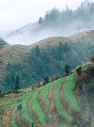 Terraces. Longsheng. Guanxi. China.