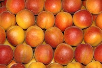 Apricot , Prunus armeniaca , Germany , fruit food