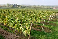 Karma Vista Vineyards and Winery. Coloma. Michigan. USA.