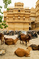 Cows on the street, Jaisalmer Fort, Jaisalmer, Rajasthan, India