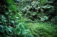 Rain Forest, Chiapas