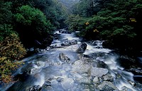 New Zealand, South Island, near Milford Sound, stream through forest
