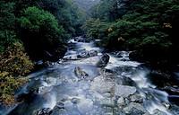 New Zealand, South Island, near Milford Sound, stream through forest