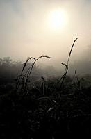 Web in Morning Fog