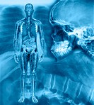 X-rays with simulated full body scan of man (Digital Composite)